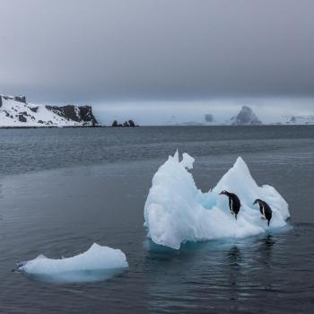La banquise mondiale au plus bas : record en Antarctique